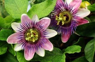 picture courtesy of: http://www.soundnaturalmedicine.com/index.html
